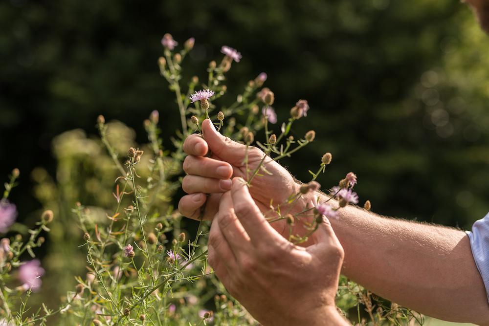 wivena Gartenpflege