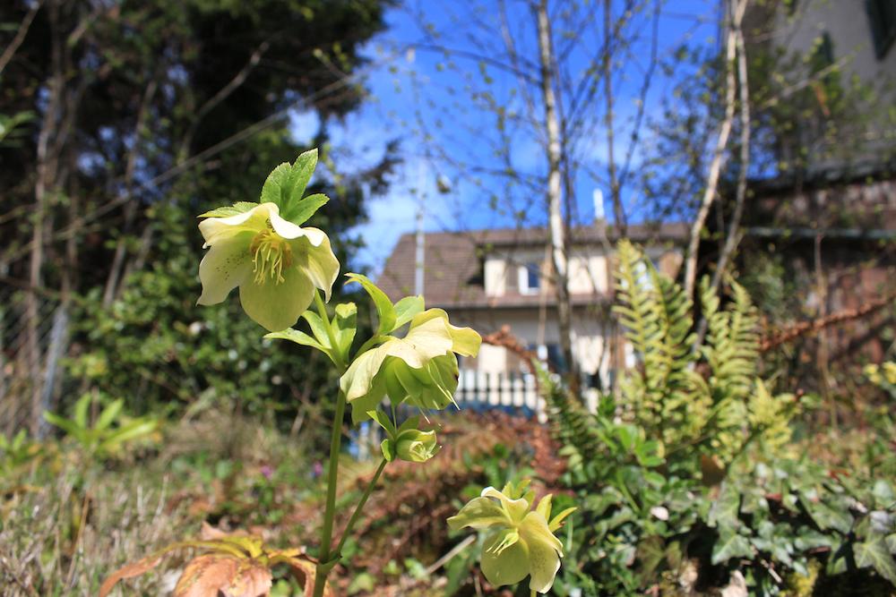 Naturnaher Garten wivena GmbH