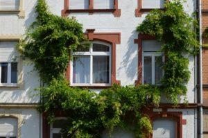 wivena GmbH Naturelemente Fassadenbegrünung
