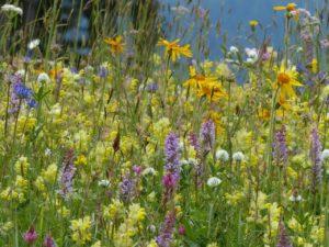 wivena GmbH Naturelemente Blumenwiesen