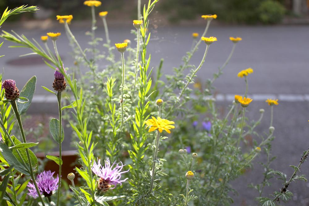wivena Wildblumenkasten
