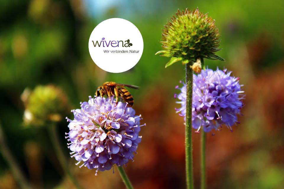 wivena GmbH